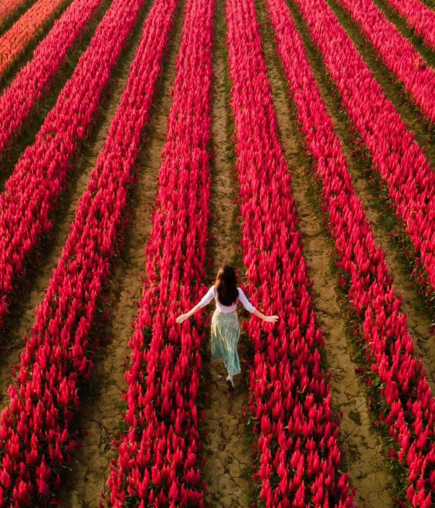 ถ่ายรูปกับทุ่งดอกไม้ถ่ายมุมสูงนางแบบหันหลังให้กล้องได้ภาพสวยพร้อมวิวสวยๆ